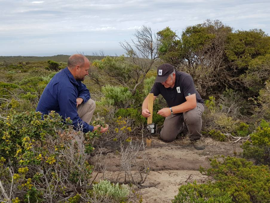 SENSOR CAMERA: Darren Grover from WWF-Australia and Paul Jennings from Kangaroo Island Landscape Board install sensor cameras in Flinders Chase National Park on the western end of Kangaroo Island. The cameras are designed to track the recovery of animals impacted by Australias bushfires as part of a project called An Eye on Recovery. Photo: WWF / Slavica Miskovich